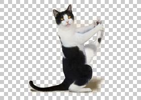 狗和猫,黑猫,爪子,,狗,瑜伽狗,小猫,瑜伽猫的完美锻炼,猫,