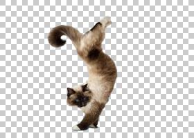 狗和猫,暹罗语,爪子,小猫,瑜伽狗,狗,瑜伽猫的完美锻炼,猫,