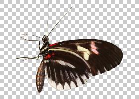 毛毛虫卡通,飞蛾和蝴蝶,刷脚蝴蝶,蝴蝶和蛾子,显微镜,动物,灌木,
