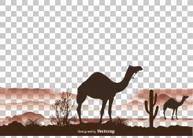 树干,景观,阿拉伯骆驼,长颈鹿,骆驼般的哺乳动物,牲畜,长颈鹿科,