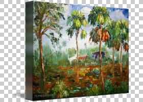 棕榈树背景,棕榈树,阿雷卡莱斯,树,景观,丛林,森林,生态系统,猎杀