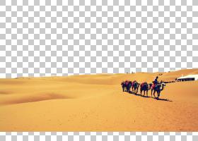 天空背景,景观,沙漠,撒哈拉沙漠,骆驼般的哺乳动物,风沙地貌,沙子