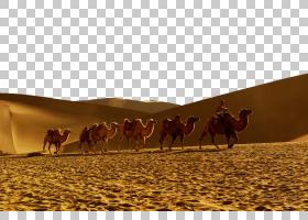 马卡通,景观,羊群,生态区,阿拉伯骆驼,种马,骆驼般的哺乳动物,生