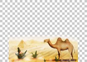 绘画卡通,景观,生态区,阿拉伯骆驼,骆驼般的哺乳动物,牲畜,野生动