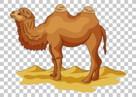 骆驼骆驼,小鹿,沙漠,景观,适应,野生动物,牲畜,动物形象,双峰驼,