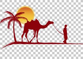 骆驼骆驼,尾巴,牲畜,景观,骆驼,阿拉伯骆驼,数字艺术,旱作,骆驼野