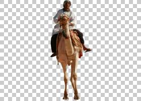 骆驼骆驼,服装,外衣,骆驼般的哺乳动物,园林绿化,景观照明,建筑制