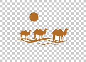 旅游观光,景观,野生动物,线路,牲畜,阿拉伯骆驼,骆驼般的哺乳动物