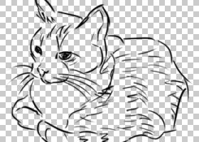 黑白书籍,耳朵,插图,缅因州浣熊,家养短毛猫,野生动物,猫猫,眼睛,