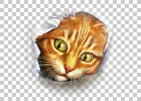 小猫卡通,龙李,鼻部,胡须,欧洲短毛鸟,眼睛,近距离观察,托伊格,猫