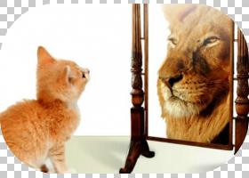 小猫卡通,鼻部,胡须,毛发,眼睛,动物,繁育,反射,宠物,镜像,美洲狮