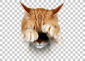 猫卡通,爪子,爪子,毛发,眼睛,鼻部,鼻子,胡须,泪水,迷信,鲶鱼,感