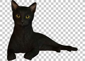 猫卡通,尾巴,毛发,亚洲人,孟买,猫,黑色,巴西短毛鸟,缅甸猫,胡须,