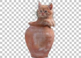猫卡通,鼻部,胡须,花瓶,RSS,动物,野猫,小猫,黑猫,博客,猫,