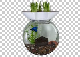 水背景,花瓶,种,花盆,农业,水,鱼,养鱼业,增长长方体,水培,玻璃杯