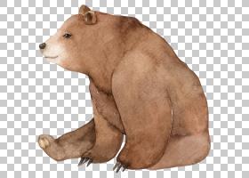 棕色的小熊