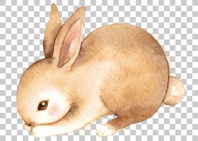 水彩小兔子
