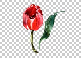 水彩植物花卉免扣装饰素材