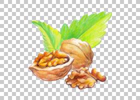 核桃坚果手绘插画免扣元素素材