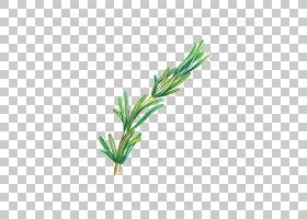 植物枝条手绘插画免扣元素素材