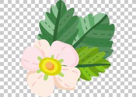 植物花卉手绘插画免扣元素素材