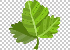 植物叶子手绘插画免扣元素素材