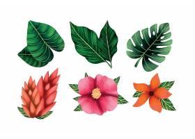 植物叶子花卉主题矢量元素