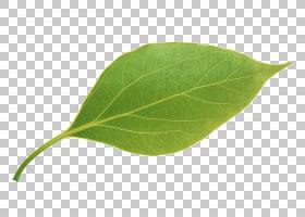 绿叶背景,种,收入,钢笔,水果,苹果,叶,