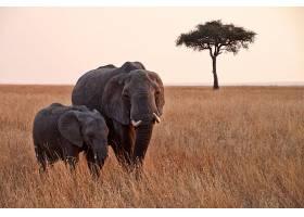 黄昏下的非洲象