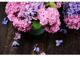 清新的紫丁香花
