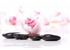 女性美容美体SPA花卉石头