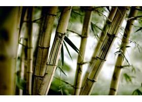 地球,竹子,自然,壁纸,