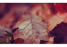 地球,叶子,壁纸,(6)
