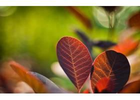 地球,叶子,壁纸,(8)