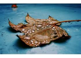 地球,叶子,壁纸,(90)