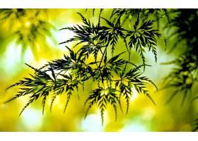 地球,叶子,自然,绿色的,秋天,热带的,Bokeh,壁纸,