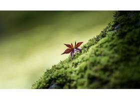 地球,叶子,苔藓,壁纸,