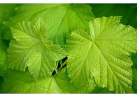 地球,叶子,藤,自然,绿色的,壁纸,(1)