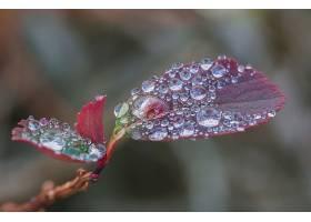 地球,叶子,露水,壁纸,