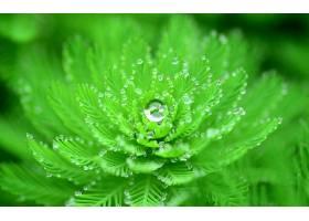 地球,叶子,露水,巨,壁纸,(1)