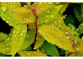 地球,叶子,露水,巨,壁纸,