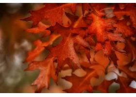 地球,叶子,巨,秋天,露水,Bokeh,壁纸,