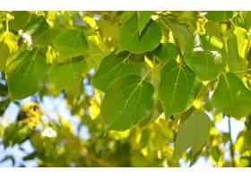 地球,叶子,树,自然,壁纸,(1)