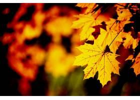 地球,叶子,橙色的,壁纸,