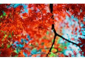 地球,叶子,秋天,壁纸,(1)