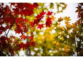 地球,叶子,秋天,壁纸,(2)