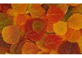 地球,叶子,秋天,壁纸,(6)