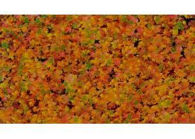 地球,叶子,秋天,壁纸,