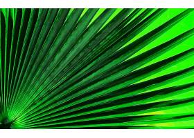 地球,叶子,纹理,绿色的,壁纸,