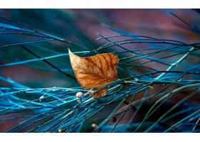 地球,叶子,自然,扭,秋天,壁纸,